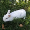 Le lapin qui surprend son magicien