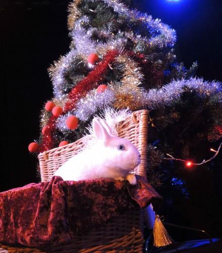 Spectacle de magie : Un Noël de magicien